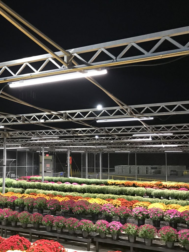 LED Outdoor Lighting -Garden Center
